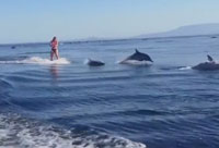 Wake Boarding with Dolphins